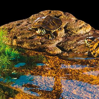 Obrázok pre kategóriu Hagen plovoucí ostrovy