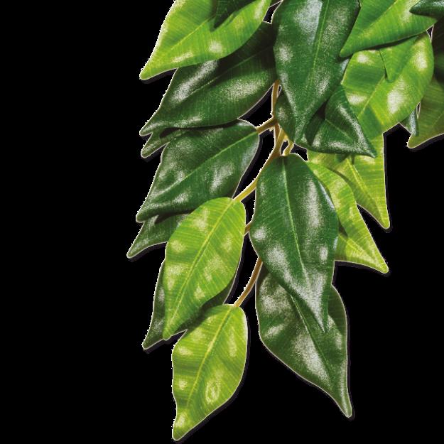 Rostlina EXO TERRA Ficus strední 55 cm