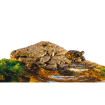 Ostrov EXO TERRA M
