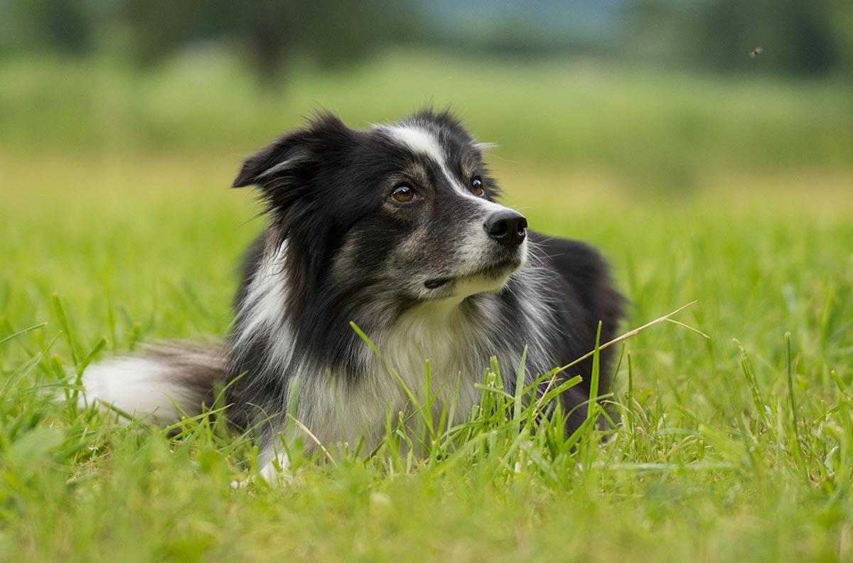 Obrázek pro kategorii Psi