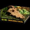 Obrázek Dekorace EXO TERRA krokodýlí lebka